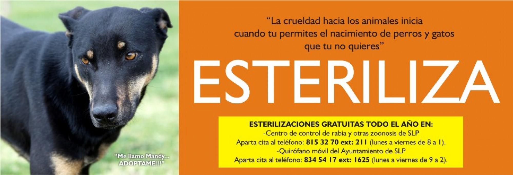 estreriliza-w-2000x682