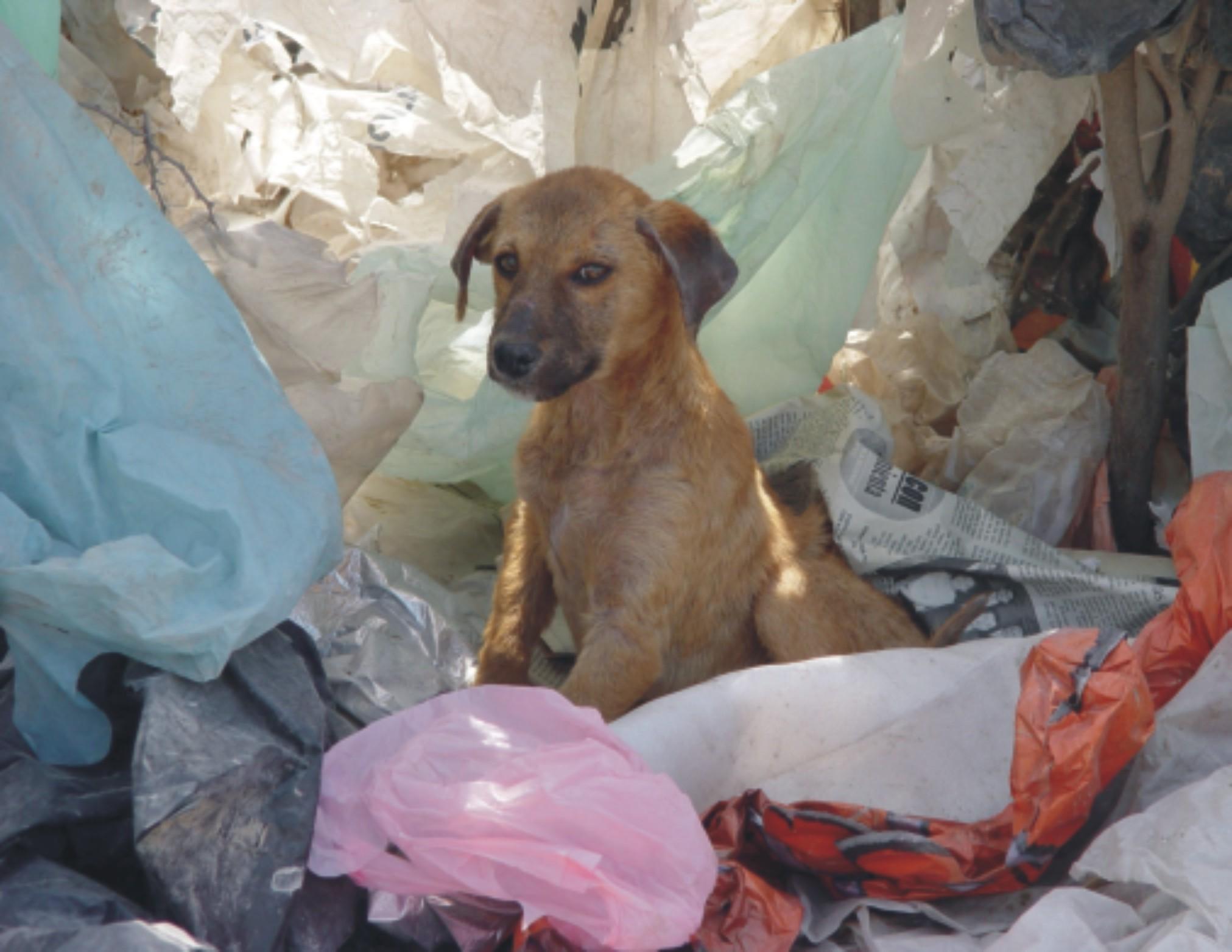 perro-en-basura
