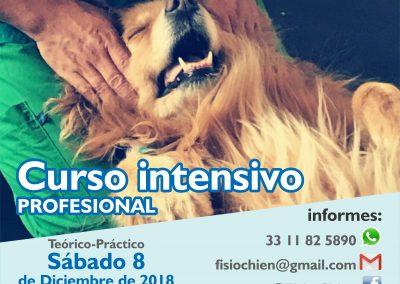 Curso de Spa - Canino