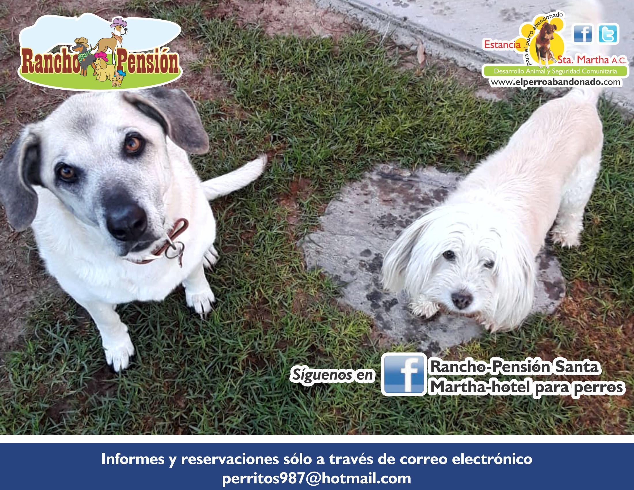 FB Rancho-Pensión-2 PERROS