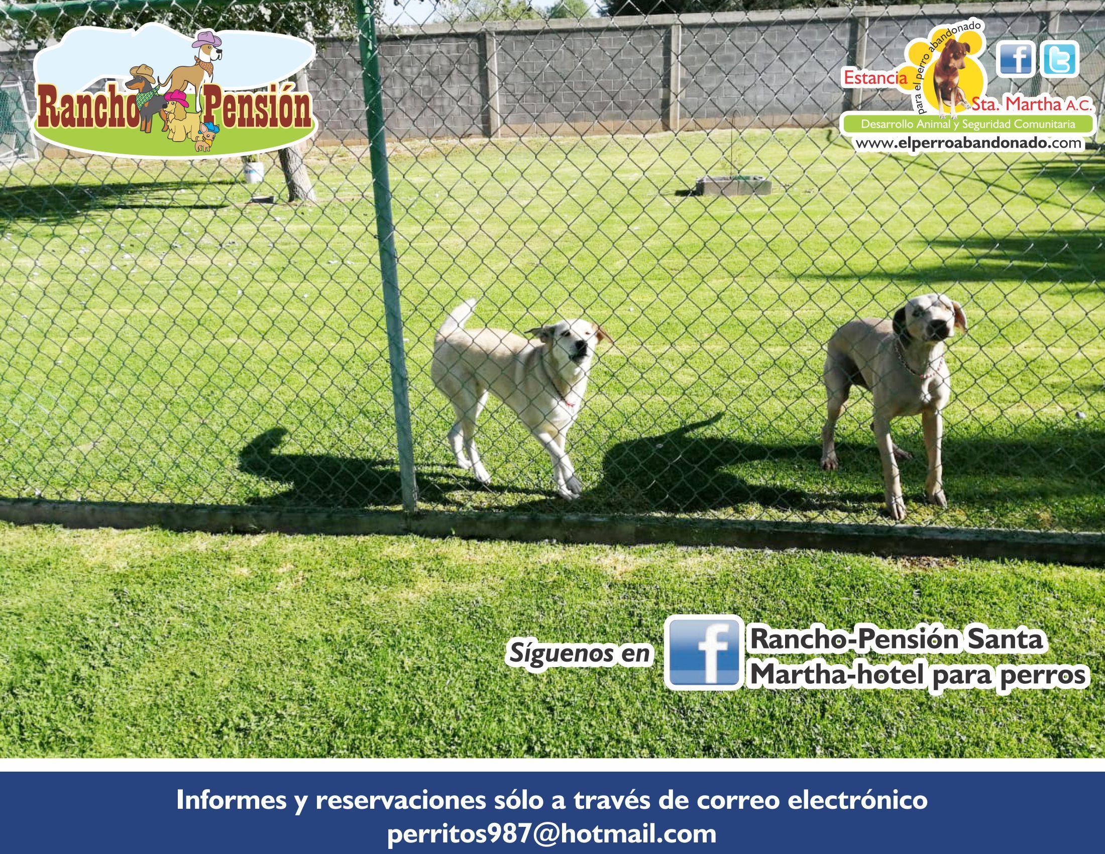 FB Rancho-Pensión- PASEOS