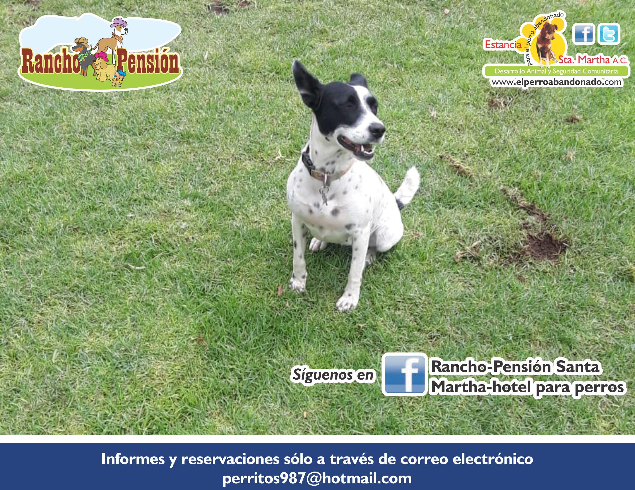 FB Rancho-Pensión-PERRO SOLO