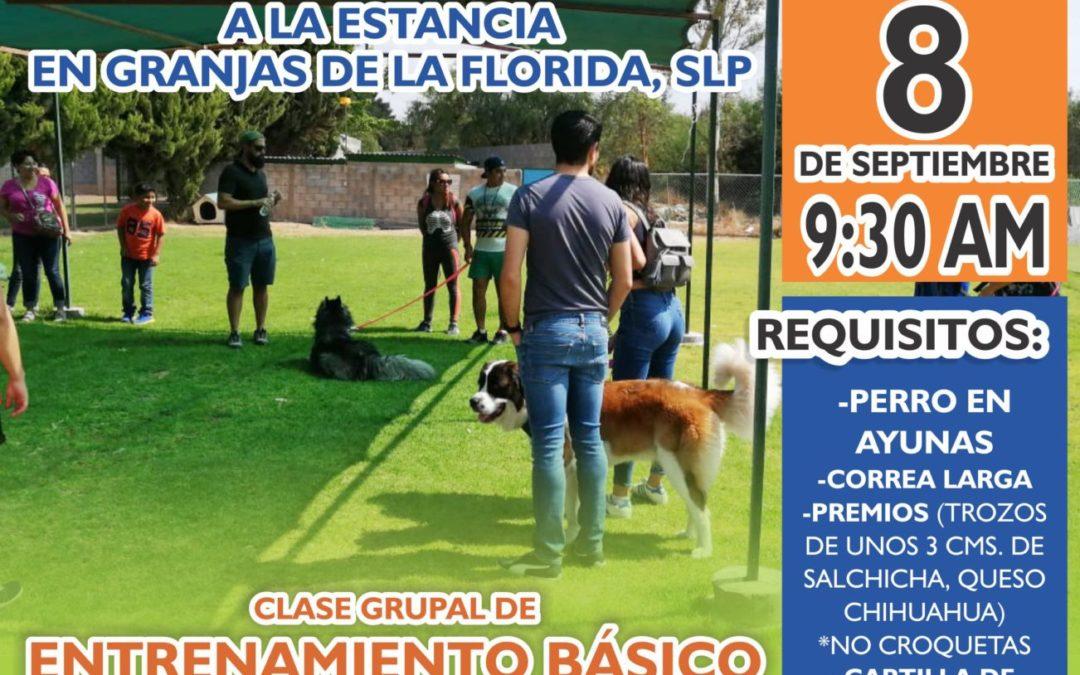 Clase gratuita de entrenamiento básico para tu perro