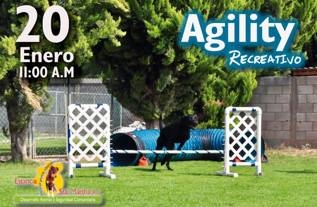 PRIMER DOMINGO DE AGILITY RECREATIVO